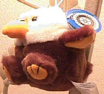 king-eagle.JPG